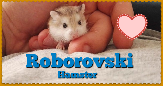 Hhamsters